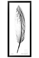 Giclee Feather II