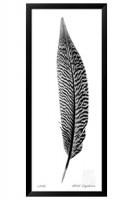 Giclee Feather III