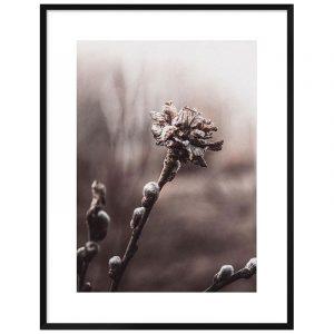 Spring Flower Bud Framed Wall Print